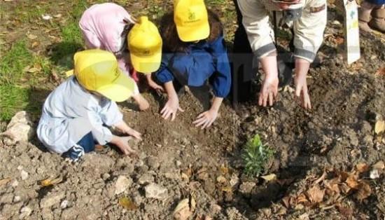 Torna la Festa dell'Albero:la campagna di Legambiente dedicata al verde urbano