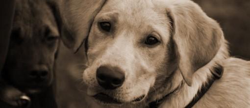 Legambiente sul sequestro di cuccioli di cani e gatti nel torinese