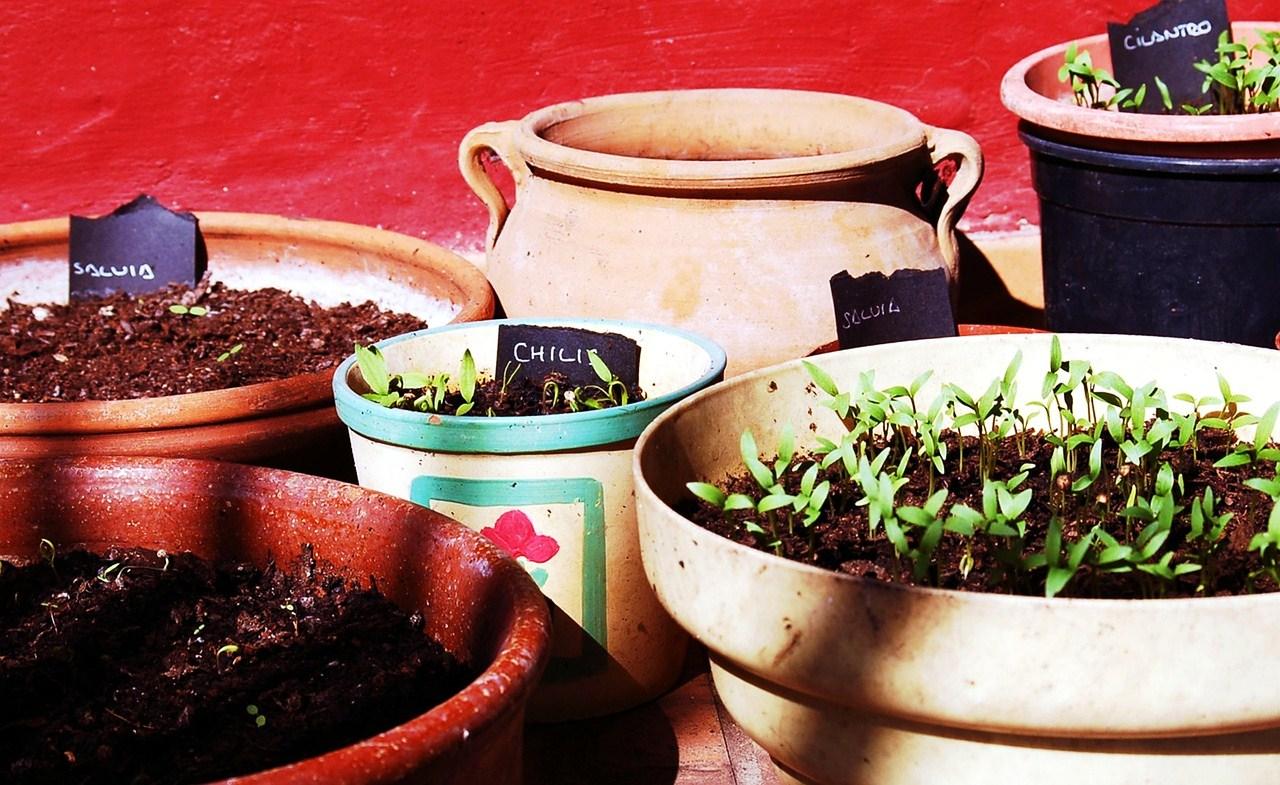 Benvenuta primavera - Corso di giardinaggio...senza giardino!